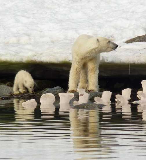 Mother and Cub feeding