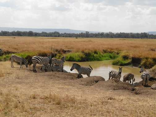 Watering Hole In The Masai Mara
