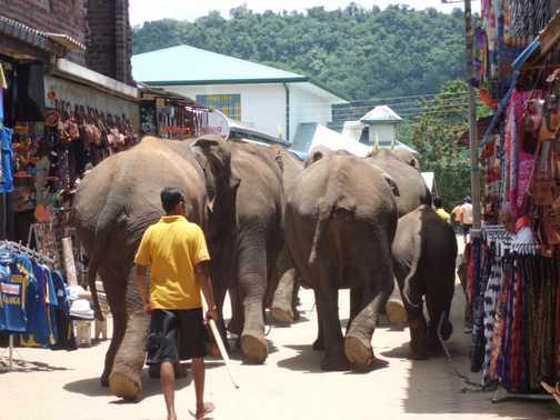 Elephants going shopping