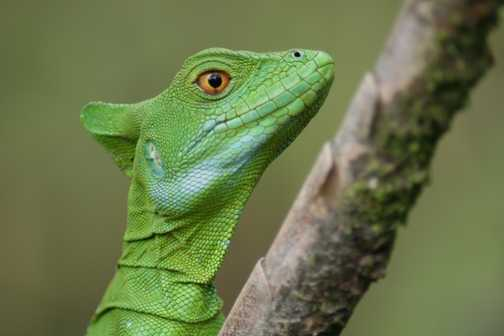 Its the green lizard on the way to the Arenal Volcano or.. is it a member of the cast of Avitar