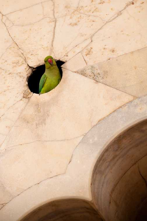 Parrot in a wall at the Red Fort