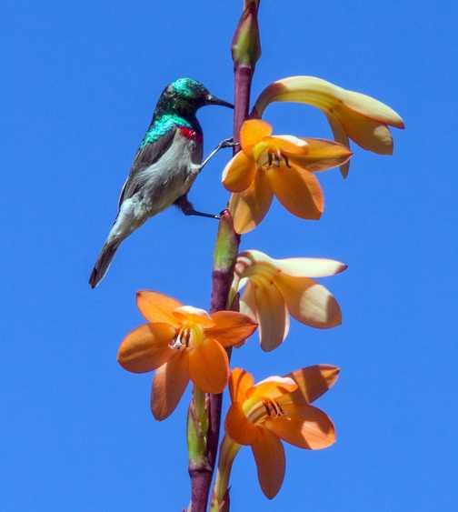 Yellow-billed hornbill - Kruger NP