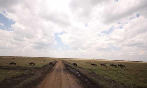 Not quite a zebra crossing