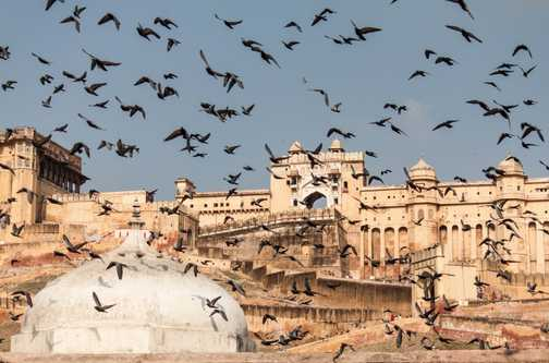 Visitors, Amber Fort