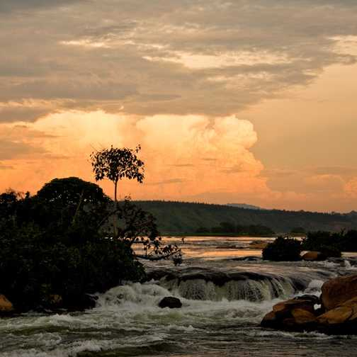 Chimpanzee, Ngamba Island.
