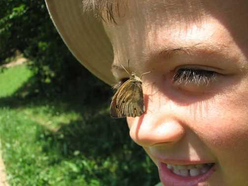 Discovering Butterflies