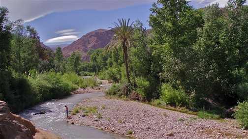River through palmery