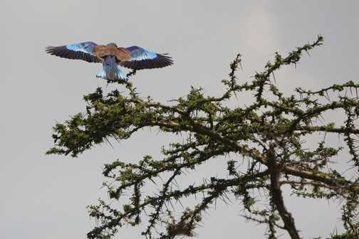 Taking flight in full colour