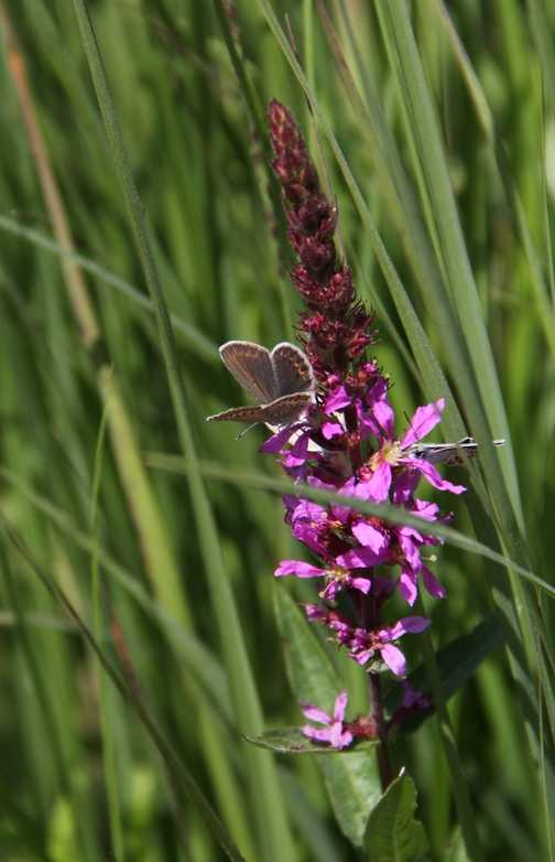 Butterflier by the Staffelsee