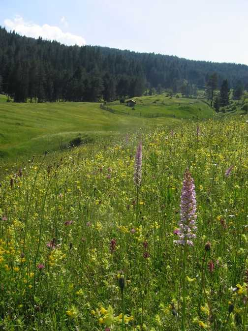 Meadows above trigrad Gorge