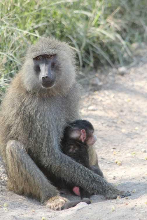 Mother & Baby Baboon, Lake Nakuru