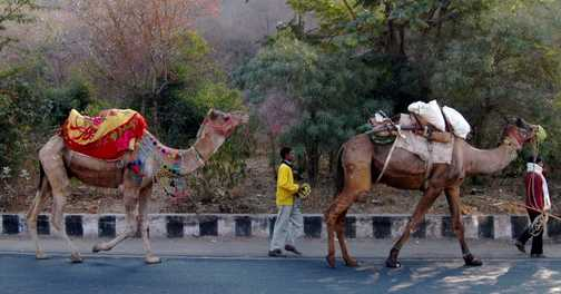 Transport Rajasthan Style