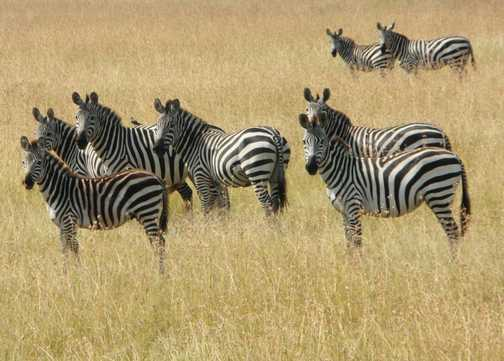 Serengeti .... think we've been spotted?