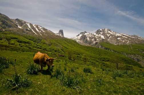 Pastures green above Bulnes