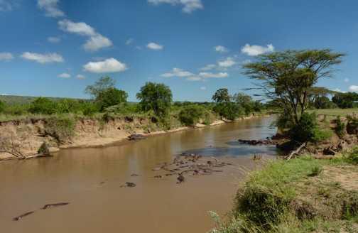Mara River breakfast spot with hippo