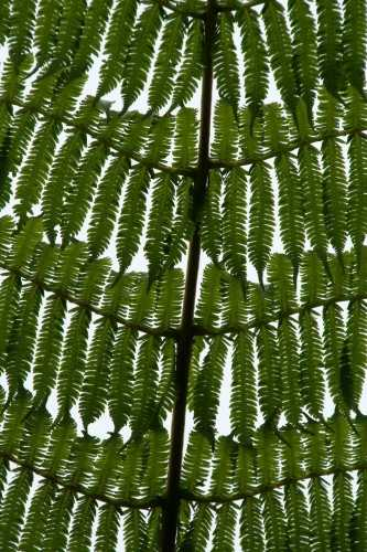 Fungus, Monteverde Cloud Forest Reserve