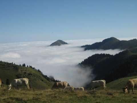 (c) Fiona: Cows in Clouds