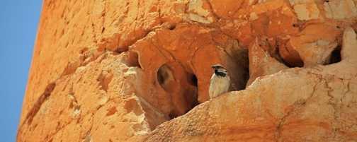 Sparrow in Eroded Column, Jerash