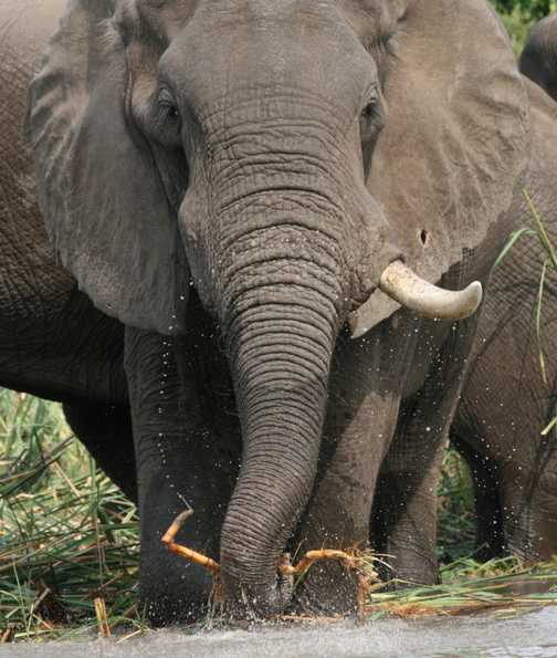 Lunchtime for the elephants