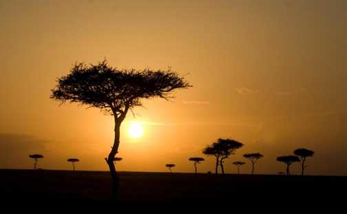 Sunset & acacias