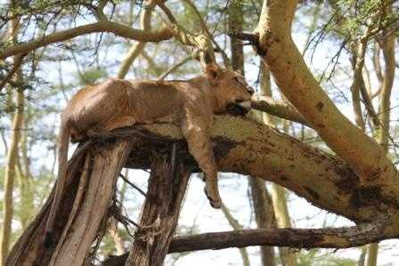A lazy afternoon -Lake Nakuru - NP