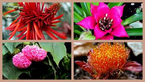 Plant Collage Botanical Gardens Funchal