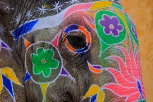 Elephants at the Amber palace