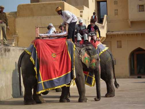 elephant in amber fort
