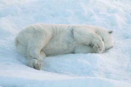 Bear 12 relaxed