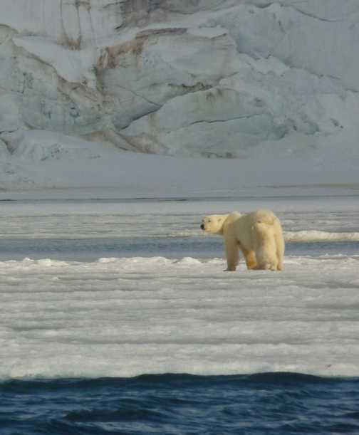 Mother and cub on the glacier