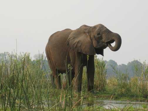 My Favourite Elephant Shot!