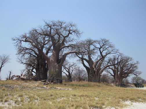 Bains Baobabs