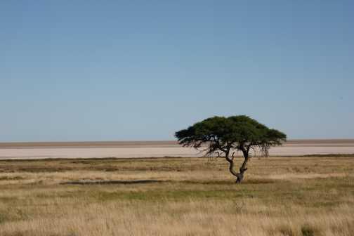 A lone elephant