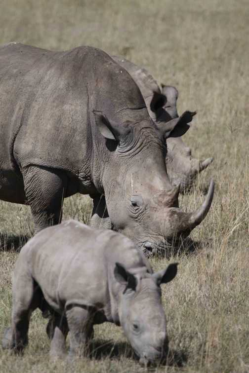 elephant on the Mara