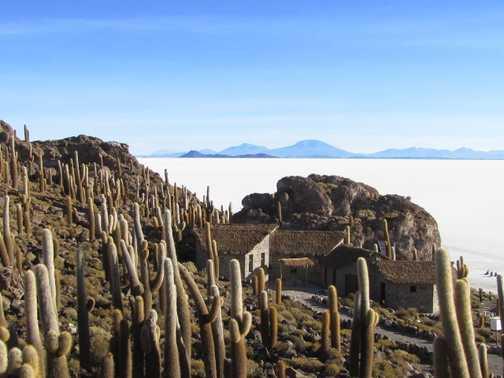 Salt Flats - Isla Pescado's huge cacti