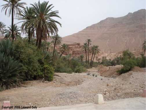 Palm trees and dry river bed at Ait Mansour