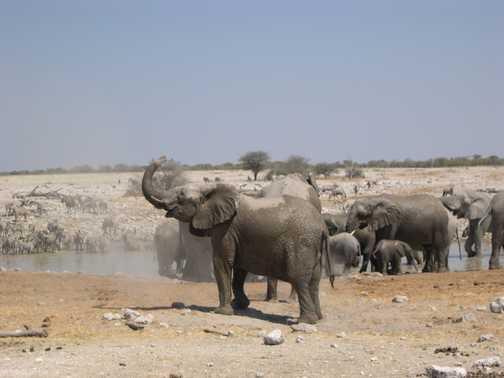 Elephants at waterhold