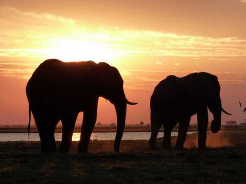 Eles in yet another stunning sunset