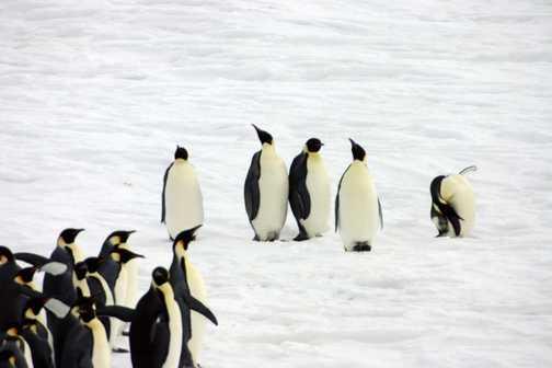 McMurdo Ice Passage : Orca