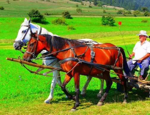 Horse and Cart Trip