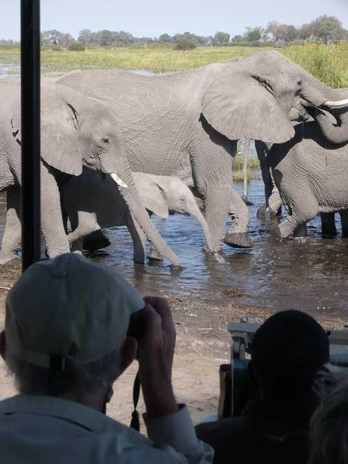 Among the elephants - Linyanti