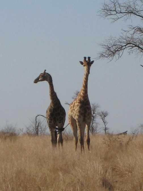 In Kruger