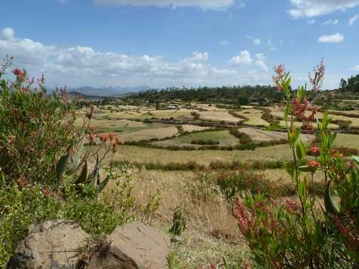 Axum Fields