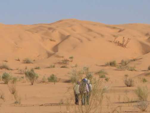 Reaching the highest dune