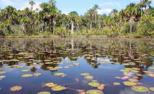 Jungle Lake 2
