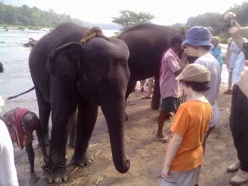 KIDS WATCHING THE ELEPHANT