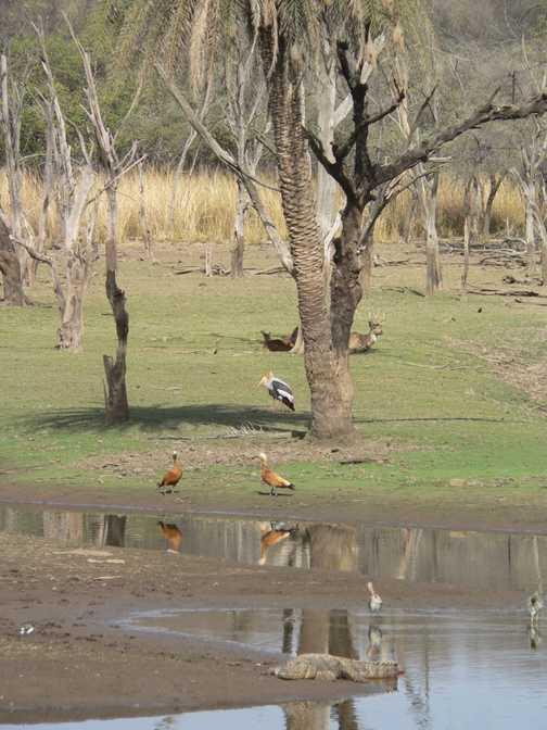 Lakeside scene at Ranthambore NP
