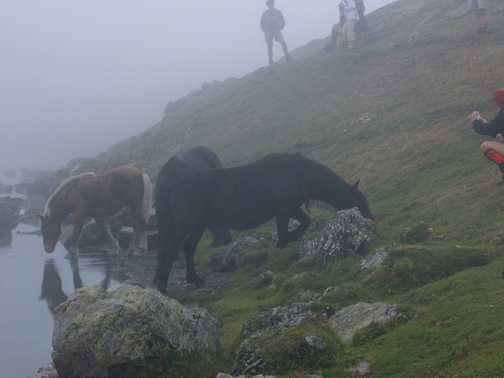 Horses in the mist