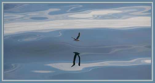 BirdOil17