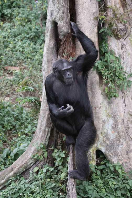 a vervet monkey with baby